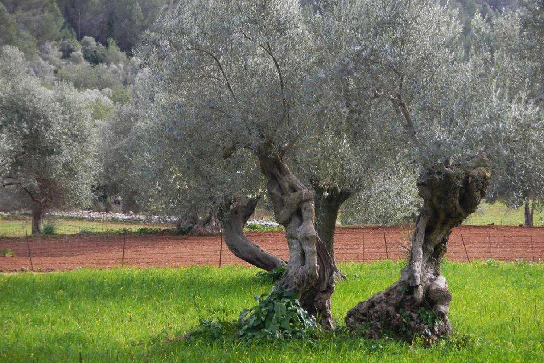 Gärtner Mallorca mallorca grimm garten deutschland