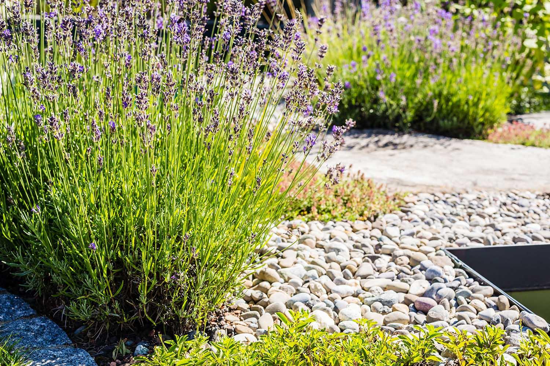 gartengestaltung pflanzungen pflanzen und landschaftplanung grimm f r garten naturpools. Black Bedroom Furniture Sets. Home Design Ideas