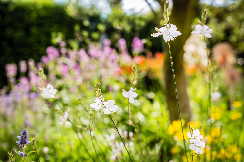 Garten Galerie Grimm Für Garten Naturpools und